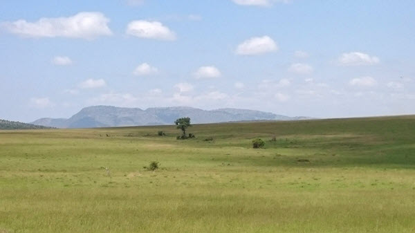 view_of_the_masai_mara